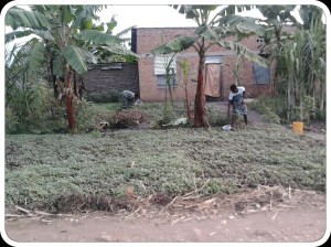 Agriculture à Bujumbura